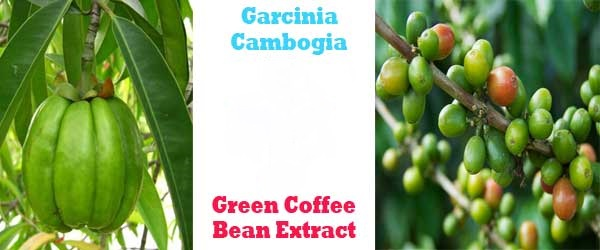 garcinia cambogia and green coffee