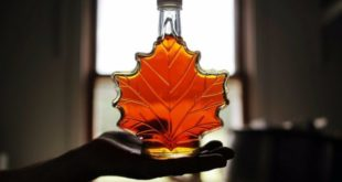 Maple syrup: A miracle food
