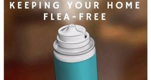 keeping your home flea-free